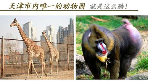 山东威海西霞口野生动物园自驾2日游>宿荣成华星宾馆
