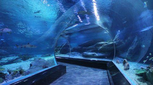 武汉极地海洋世界是多层多馆组合式室内极地海洋主题公园.