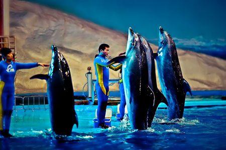 蓬莱极地海洋世界1日游 人间仙境游海洋世界,烟台往返