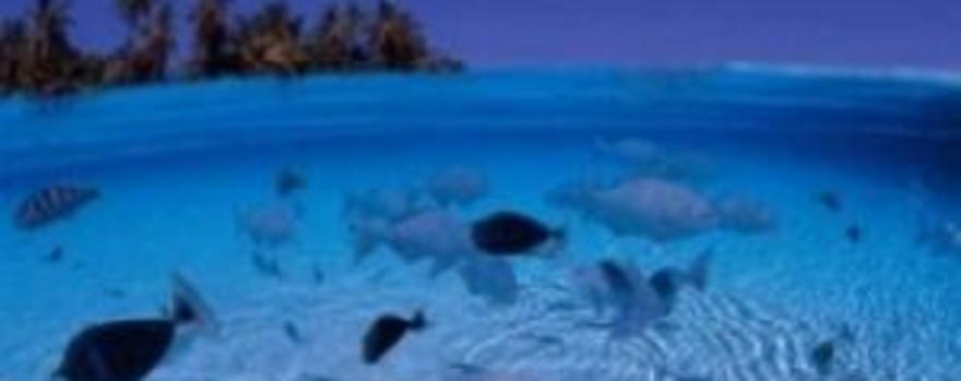 卡夫阿里夫环礁