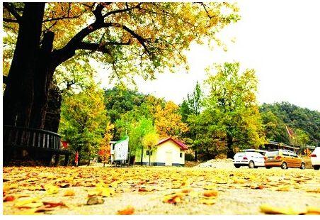 西峡银树沟生态旅游区位于西峡县东北部二郎坪乡境内栗坪村,距县城63