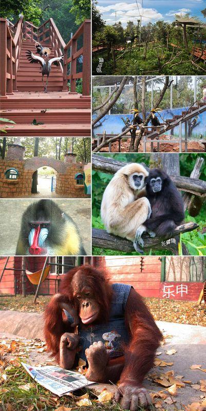 红山森林动物园旅游