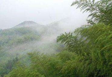 卫星 茶山竹海 风光旖旎的中国茶山竹海—国家森林公园,位于重庆永川图片