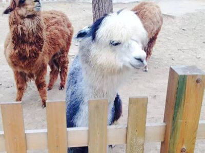 北京野生动物园好玩吗?(已解决)_游客点评_途牛