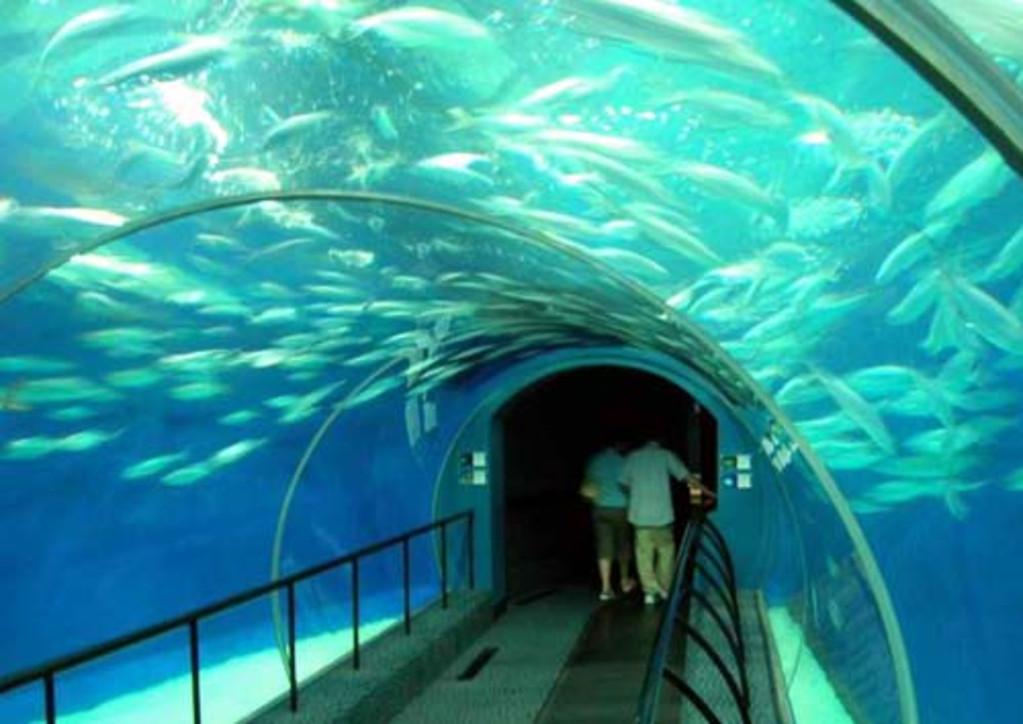 壁纸 海底 海底世界 海洋馆 水族馆 1023_724