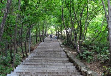 平顶山   要上平顶山走山道比石阶路有趣的多,两侧郁郁葱葱高清图片