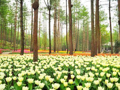 大木林下花园旅游攻略