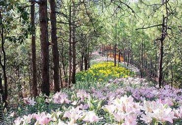 攀枝花图片_攀枝花旅游图片_攀枝花旅游景点图片大全