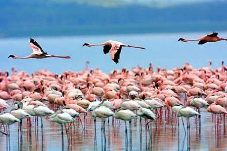 [春节]<肯尼亚-坦桑尼亚13日游>卡塔尔航空,2晚马赛马拉,奈瓦沙湖游船,塞伦盖蒂追动物,博格里亚保护区,曼雅拉湖观火烈鸟,住维多利亚湖畔
