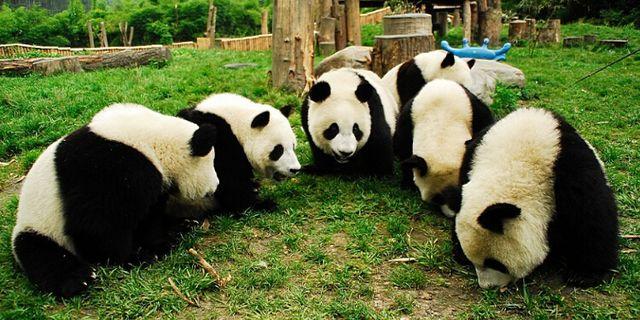 斑马,羚羊,白犀牛等,以及中国一级保护动物大熊猫,金丝猴,金毛羚牛等.