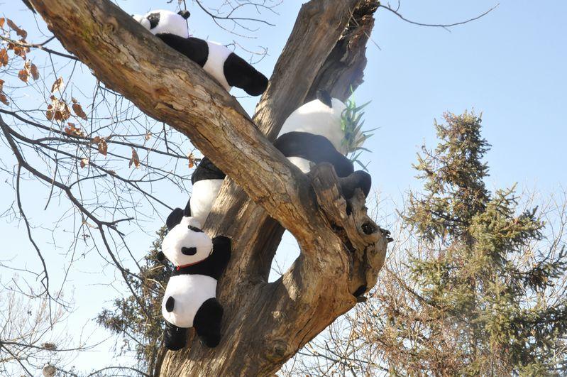 秦岭野生动物园旅游(图)_熊猫爬树_途牛