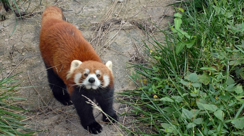 黄岛森林野生动物园-草莓采摘1日游>踏青 亲子游