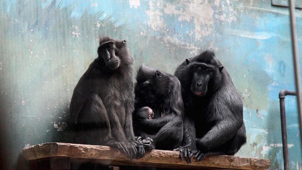 北京动物园-海洋馆1日游>欢乐之旅