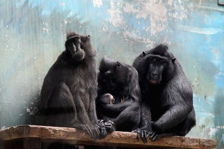 是中国最大的城市动物园,从清光绪三十二年(1906年)至今已有逾百年的