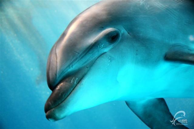 单个海豚简笔画卡通