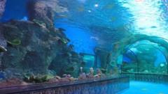 大明湖海底世界