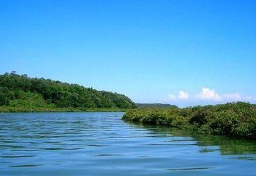 红树林图片_红树林旅游图片_红树林旅游景点图片大全