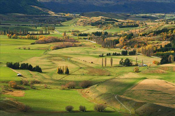 风吹草低见牛羊——新西兰小镇田园风光