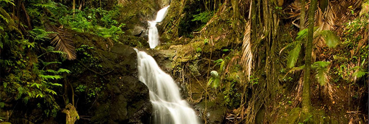 【2018】夏威夷攻略热带雨林攻略v攻略瀑布_夏镇大岛a攻略花生图片