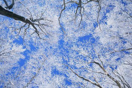 <亚布力滑雪场1日游>哈尔滨起止  初级滑雪2小时 滑雪服 雪镜 马拉爬犁 激情滑道