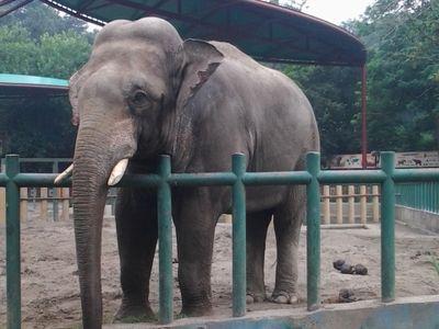 南京红山森林动物园好玩吗?(已解决)_游客点评_途牛