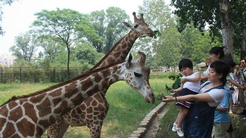 [端午] 济南动物园-解放阁-黑虎泉-芙蓉街2日游>无购物 亲子游