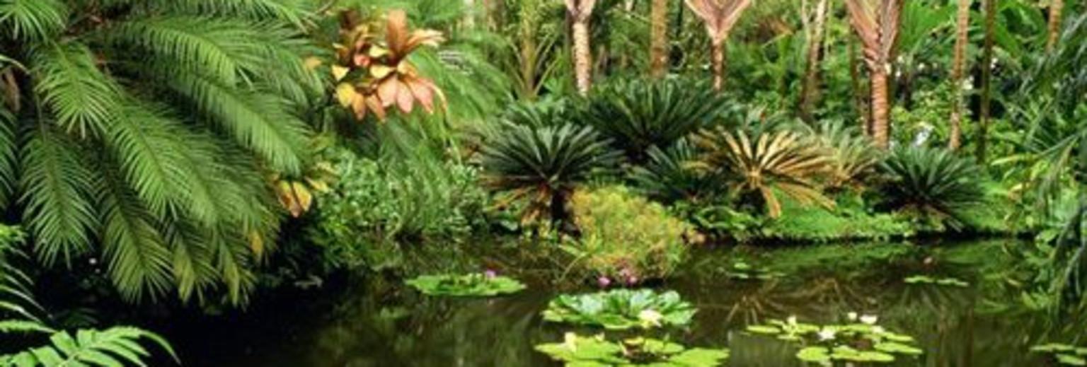 【2019】夏威夷植物园v攻略攻略_夏威夷植物园中攻略单上分图片