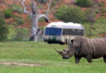 澳大利亚旅游 维多利亚州旅游 墨尔本旅游 墨尔本威勒比开放式动物园
