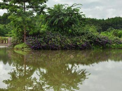 中国科学院西双版纳热带植物园交通信息 自驾线路 昆明——玉溪——