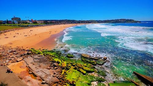 悉尼海滩丹b��(�9��_悉尼邦迪海滩游船观鲸巡游之旅