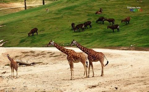 圣地亚哥动物园旅游