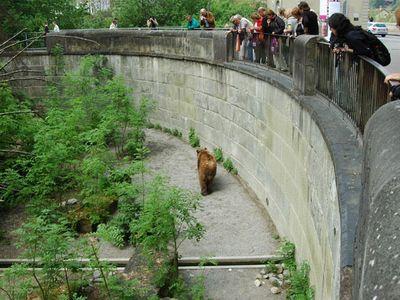 伯尔尼熊苑