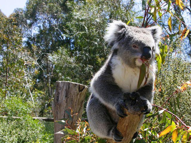 游玩时长:约2小时 克雷兰野生动物园位于阿德莱德