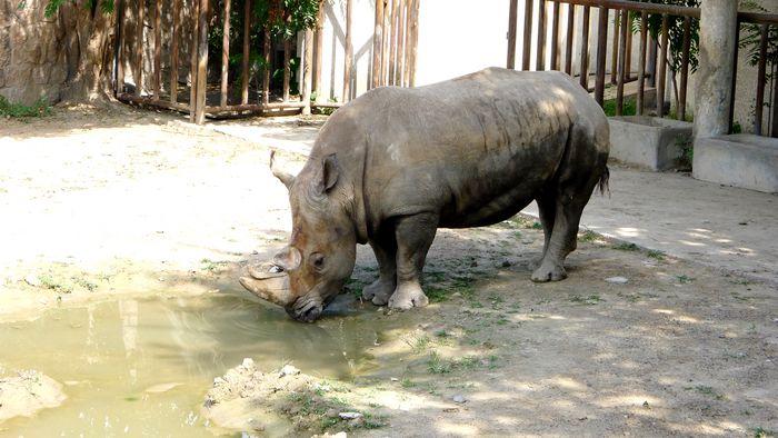 壁纸 犀牛 野生动物 700_394