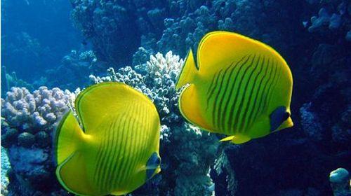 海底深处的动物图片