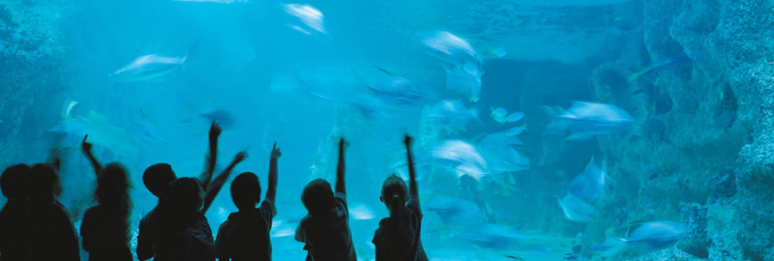 澳大利亚悉尼水族馆