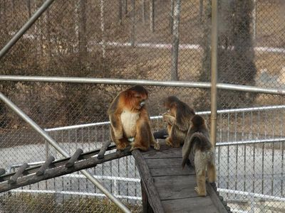 保护,野生动物驯养繁殖及科普教育为一体的大型自然