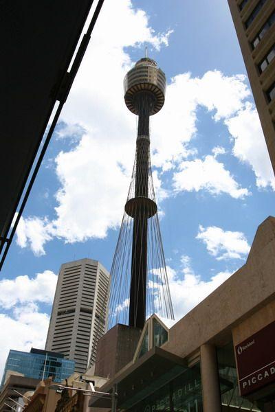 悉尼塔旅游图片