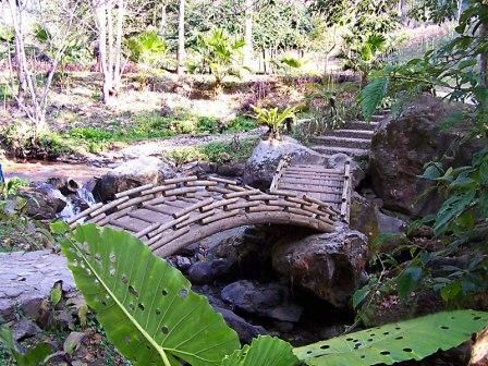 瑞丽市莫里热带雨林景区