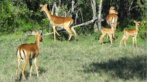 """通常又俗称为""""甜水私人保护区"""",占地约90000英亩;奥佩吉塔野生动物"""