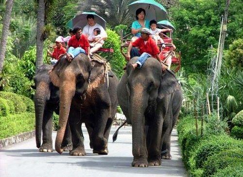 泰国的四大动物
