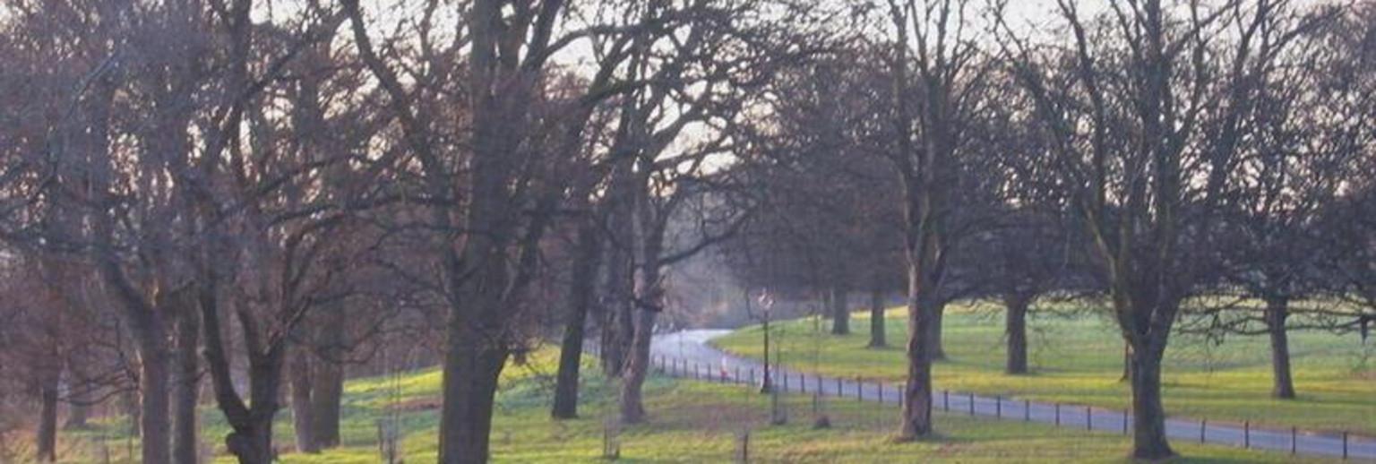 公园里的杨树比柳树的