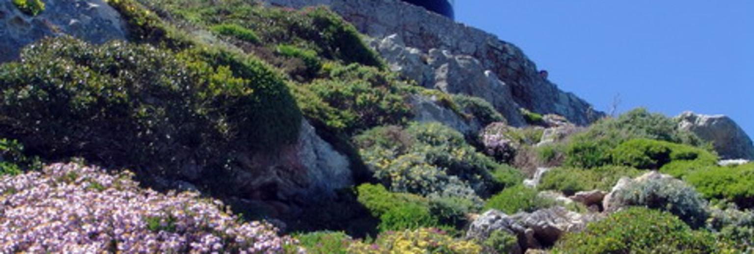 开普角是一个巨大的岩石,挺拔高耸,海拔高度两百多米,风光迤逦。山上的顶端矗立着一座白色灯塔,是整个海角的最高点,也是好望角的标志性景观。