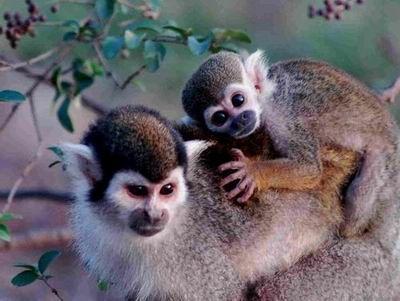 安徽 合肥 蜀山区 野生动物园   共3张,1组图片