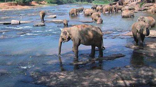 在这里你和憨厚可爱的大象亲密接触