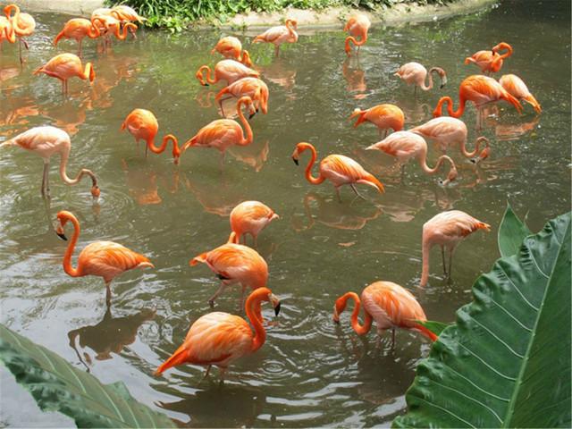【当地玩乐】<新加坡裕廊飞禽公园-日间动物园-夜间动物园1日游>2人起订拼车接送