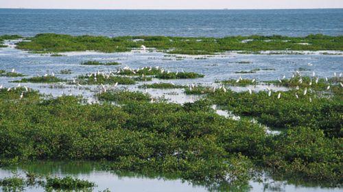 瓜果亲子游-北海-涠洲岛-银滩-红树林赶海-4日游>岛上住一晚,2晚五星