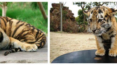 奇妙的动物朋友 上海野生动物园自驾游>宿四星上海莎