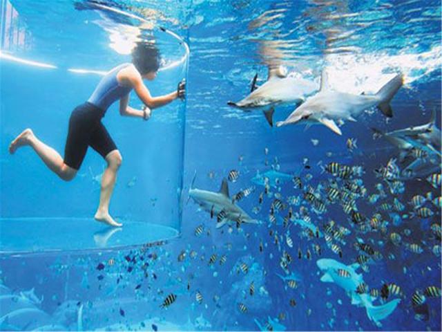 【与海豚共舞】<新加坡水上探险乐园+海豚园>体验套票