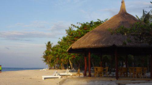 海边椰子树猴子